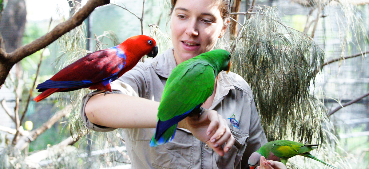 BANNER_Zoo-Keeper-with-birds-at-the-Rockhampton-Zoo-1.jpg