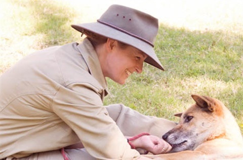 THUMB-Dingo-zoo-keeper-Rockhampton-Zoo.jpg