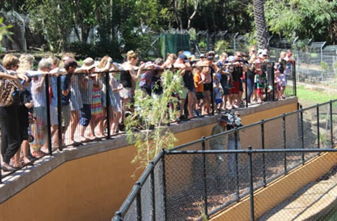 THUMB-People-watching-crocodiles-Rockhampton-Zoo.jpg